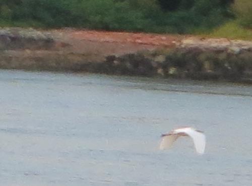 egret nyc