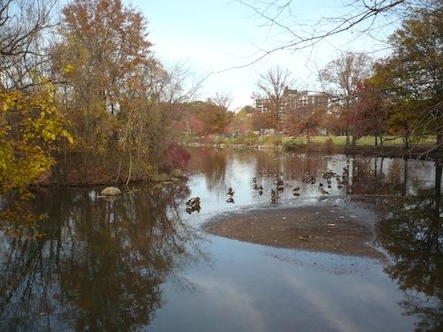 clove lakes park staten island