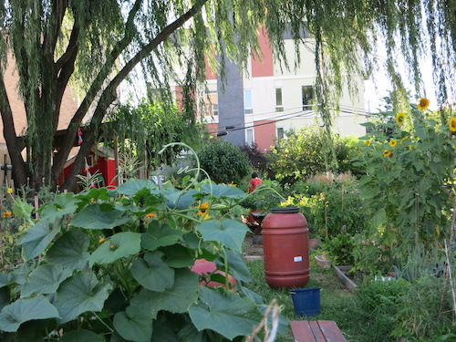 red shed community garden williamsburg brooklyn nyc