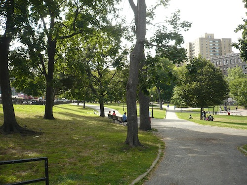 devoe park bronx pin oaks and scholar trees