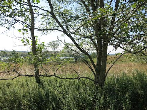 freshkills park fresh kills staten island nyc