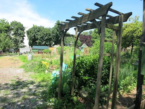 hattie carthan community garden bedford-stuyvesant brooklyn nyc new york city parks