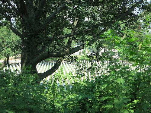 highland park cypress hills cemetery ridgewood reservoir nyc