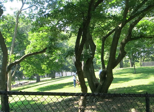 lincoln terrace park arthur s somers park crown heights brooklyn nyc