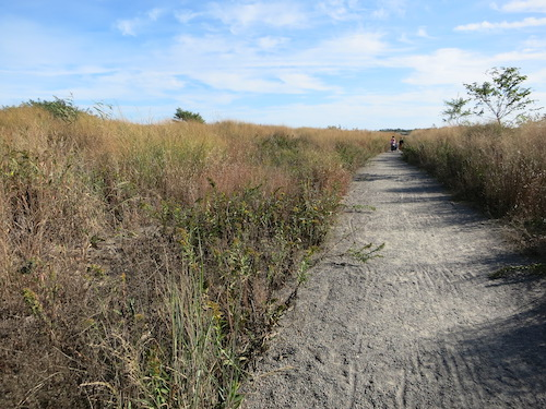 marine park salt marsh nature trail brooklyn nyc