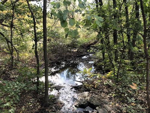mitsubishi riverwalk bronx river new york city parks