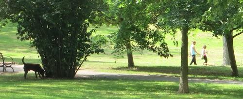 arthur von briesen park staten island nyc